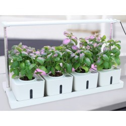Hydroponi LEDlife hydroponisk plantebakke - Hvid, inkl. vækstlys, 12 pladser, 4x2L vandtank